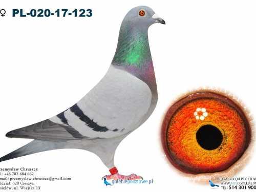 Profesjonalne zdjęcia gołębi pocztowych
