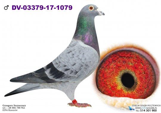 DV-03379-17-1079