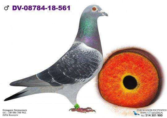 DV-08784-18-561-hodowla-golebi-gasperowicz-adam