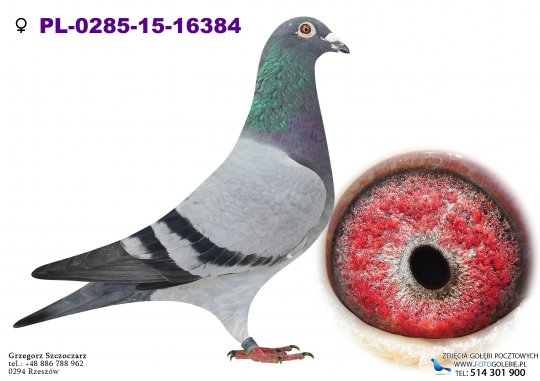 PL-0285-15-16384-golab-pocztowy-buttner-arkadiusz