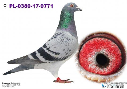 PL-0380-17-9771